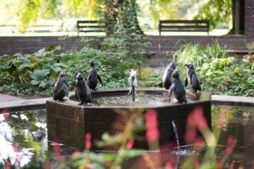 August Gaul: Pinguinbrunnen, (Foto: KUNST@SH/Jan Petersen, 2018)